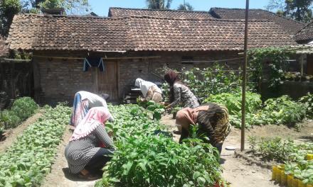Inovasi Pemanfaatan Tanah Pekarangan